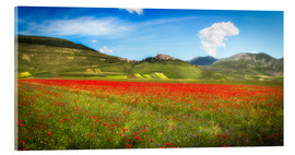 Acrylic print  Poppies at Piano Grande, Italy - Frank Fischbach