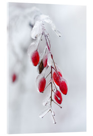 Acrylic print  Spring frost