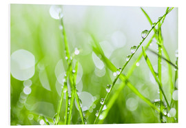 Foam board print  rain-wet grass