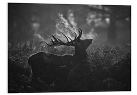 Foam board print  A large male deer stag bellows out in a cold winter landscape of Richmond park, London. - Alex Saberi
