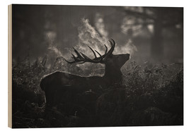 Wood print  A large male deer stag bellows out in a cold winter landscape of Richmond park, London. - Alex Saberi