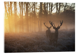 Acrylic glass  Two deers in a misty forest in Richmond Park, London - Alex Saberi