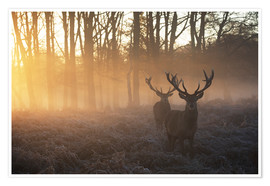 Premium poster  Two deers in Richmond Park, London - Alex Saberi