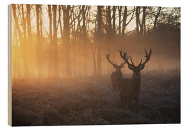Wood print  Two deers in Richmond Park, London - Alex Saberi