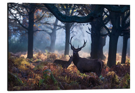 Aluminium print  A red deer stag in a misty forest in Richmond park, London. - Alex Saberi