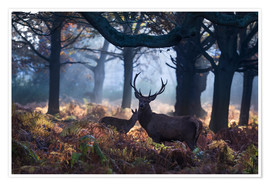 Premium poster  A red deer stag in a misty forest in Richmond park, London. - Alex Saberi