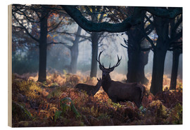 Wood print  A red deer stag in a misty forest in Richmond park, London. - Alex Saberi