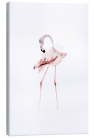Jaysanstudio - The Flamingo