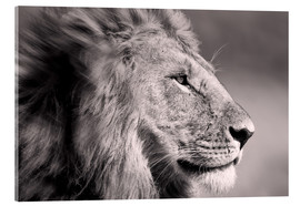 Acrylic print  The Lion King - Ingo Gerlach