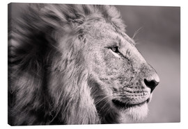 Canvas print  The Lion King - Ingo Gerlach