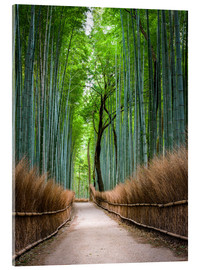 Acrylic glass  Bamboo Forest in Kyoto Sagano Arashiyama, Japan - Jan Christopher Becke