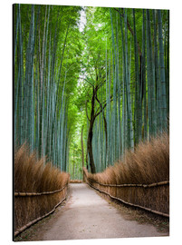 Aluminium print  Bamboo Forest in Kyoto Sagano Arashiyama, Japan - Jan Christopher Becke