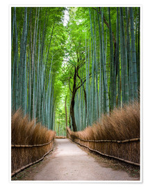 Premium poster  Bamboo Forest in Kyoto Sagano Arashiyama, Japan - Jan Christopher Becke