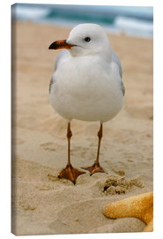 Canvas  Seagull in the sand