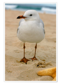 Premium poster  Seagull in the sand