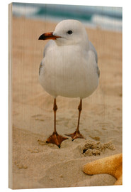 Wood print  Seagull in the sand