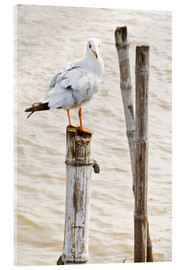 Acrylic print  Seagull on pole
