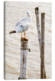 Canvas print  Seagull on pole