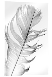 Acrylic glass  Delicate feather