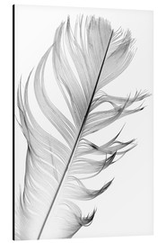 Aluminium print  Delicate feather