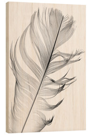 Wood print  Delicate feather