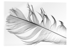 Acrylic print  Feather