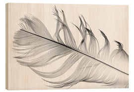 Wood print  Feather