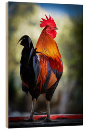 Wood print  Tail feathers of a rooster