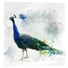 Acrylic print  Peacock of the page