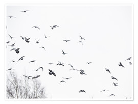 Premium poster Flock of birds