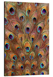 Alu-Dibond  Peacock feathers bronze