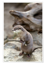 Premium poster  Otter with walker