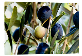 Acrylic print  Olives on branch