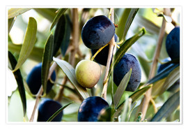 Premium poster  Olives on branch