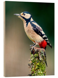 Wood print  Woodpecker stands guard