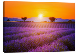 Canvas  Sun over lavender