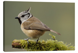 Canvas print  Crested Tit in Moos - Uwe Fuchs
