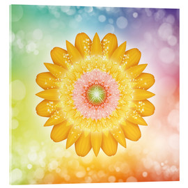 Acrylic print  Mandala, love and light - Dolphins DreamDesign