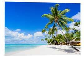 Forex  Palm beach in the South Pacific with white sand and blue sea - Jan Christopher Becke