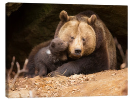 Canvas print  Brown bear with young bear - Dieter Meyrl