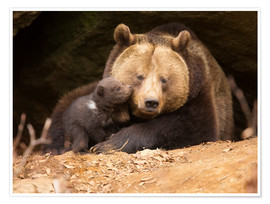 Premium poster  Brown bear with young bear - Dieter Meyrl