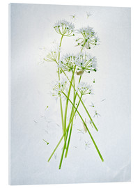 Acrylic print  Allium ursinum, medicinal herb - Axel Killian