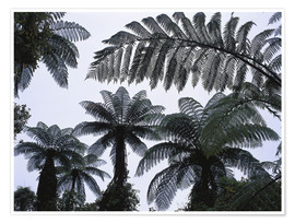 Premium poster  A roof of tree ferns - Thonig