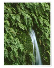 Premium poster  Ferns at a waterfall - Thonig