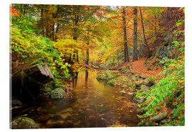 Acrylic print  Little brook in autumn forest - Dieter Meyrl
