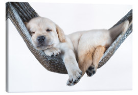 Canvas print  Labrador puppy in hammock - Beate Margraf