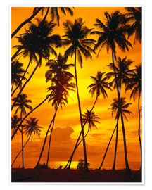 Premium poster Palm trees in the sunset