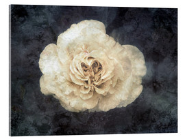 Acrylic print  White rose superimposed with floral texture - Alaya Gadeh