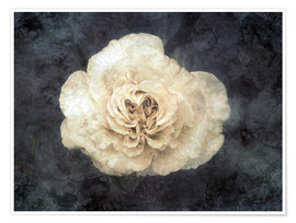 Premium poster  White rose superimposed with floral texture - Alaya Gadeh