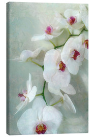 Canvas  Composition of a white orchid with transparent texture - Alaya Gadeh